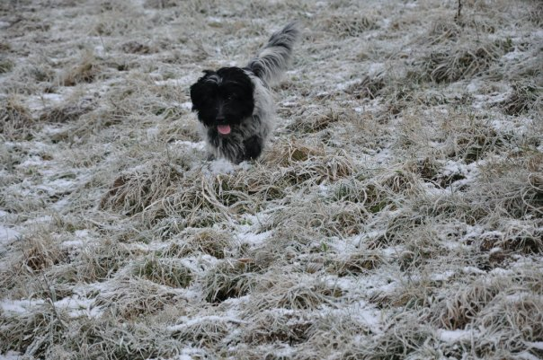Lost: Black and White Shaggy Dog