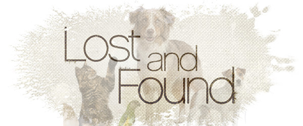 Lost: a black and white male collie