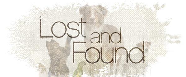 Found: a female husky