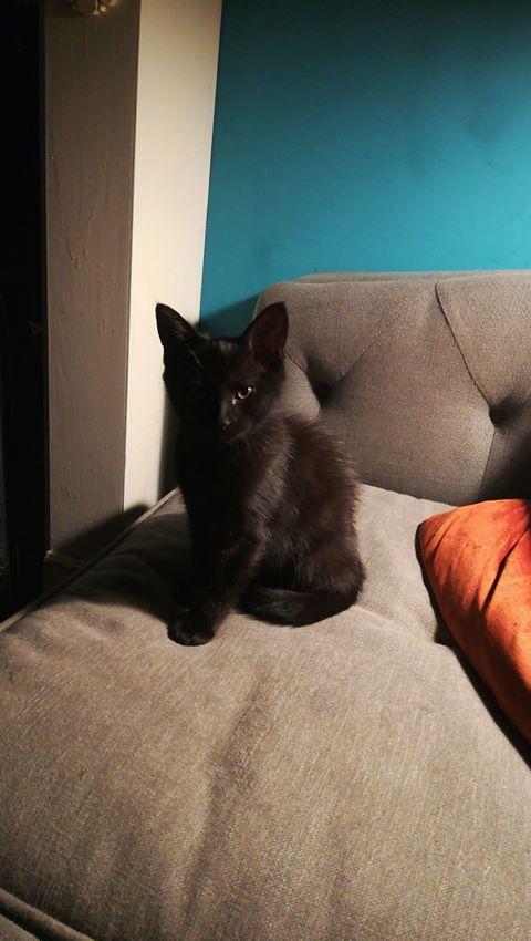 Found: Black kitten
