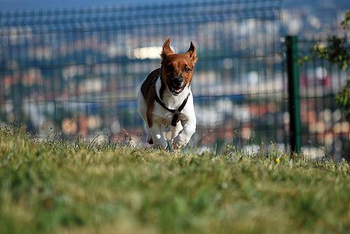 Found: Dog
