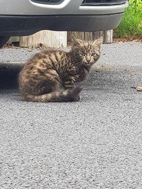 Found: a kitten