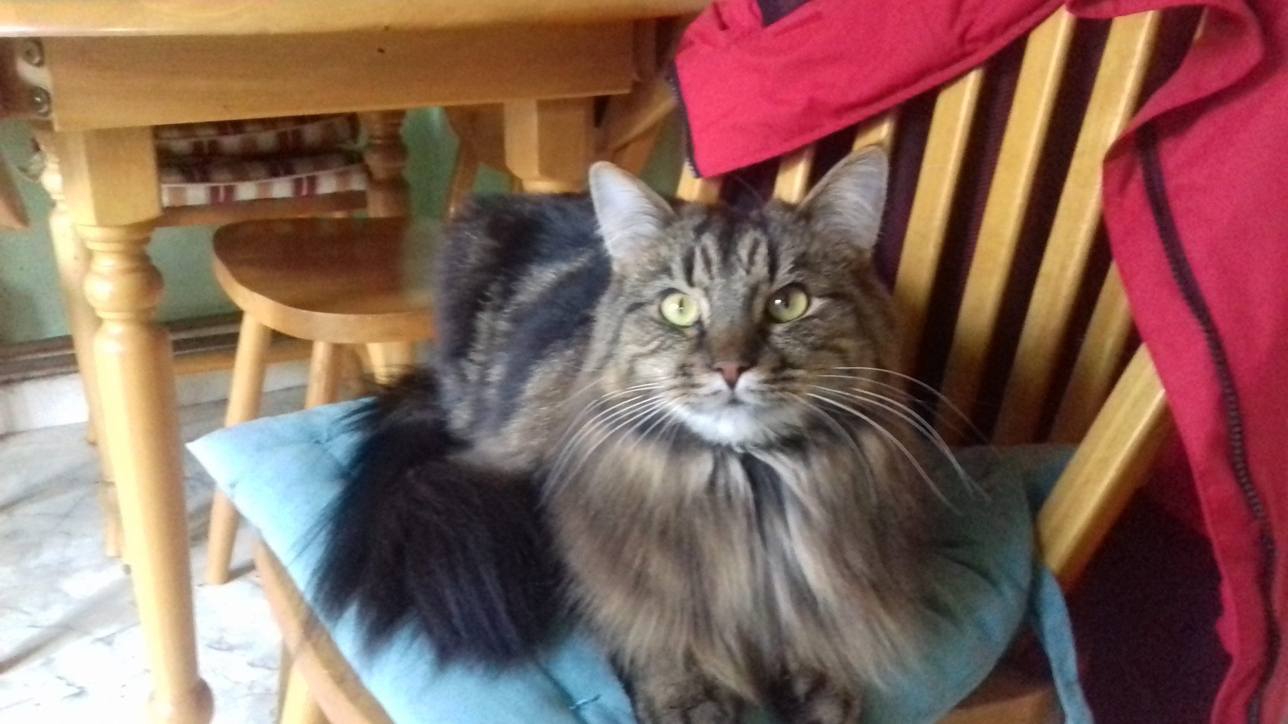Lost: male brown tabby cat