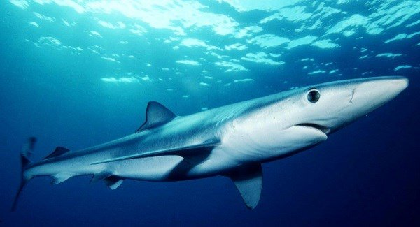 Man seriously injured after being bitten by shark off coast of Cork