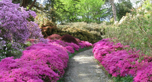 Mount Congreve Gardens to open at the weekends for the Winter.