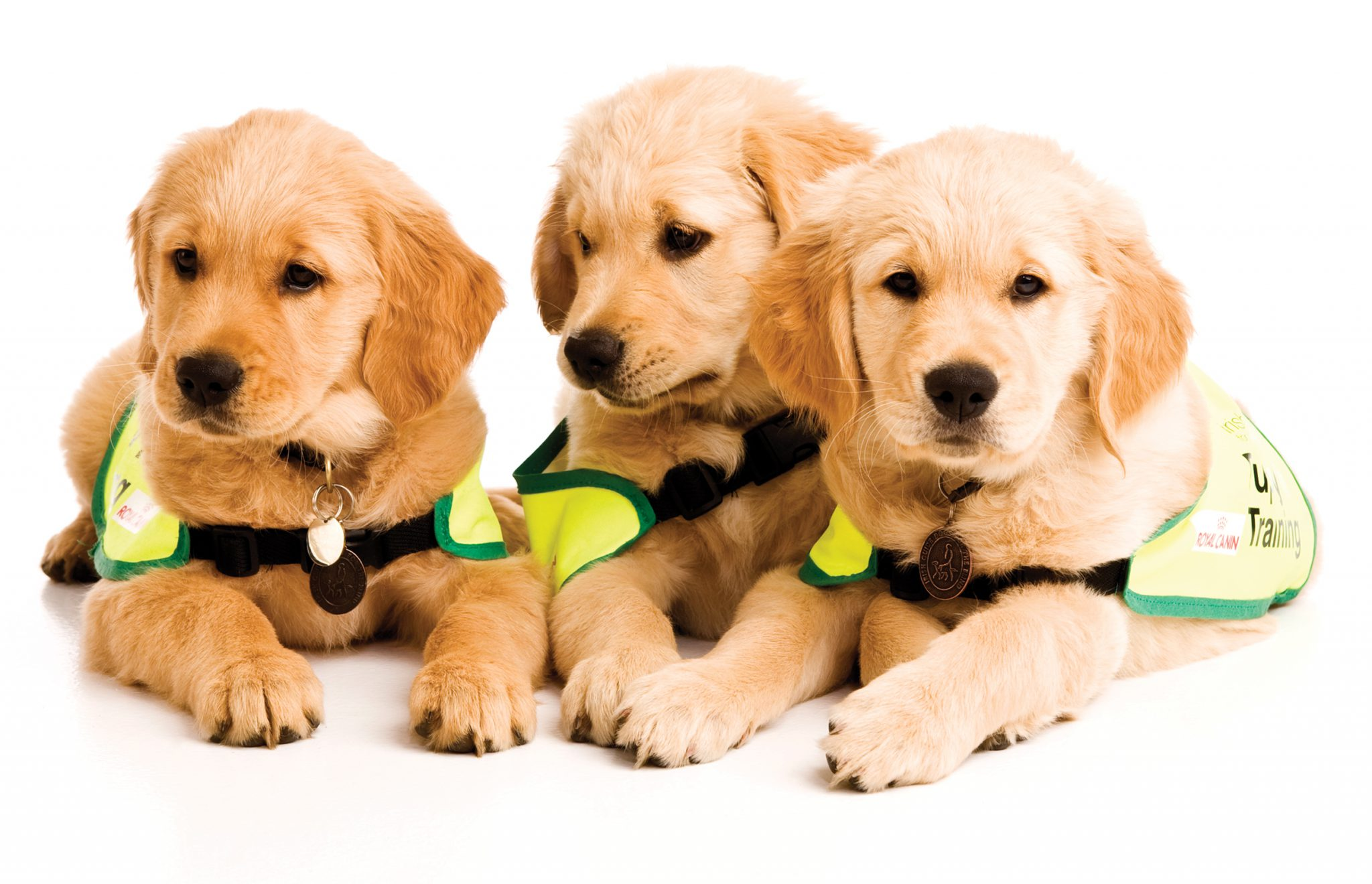 Ladies Lunch in aid of the Irish Guide Dogs November 23rd