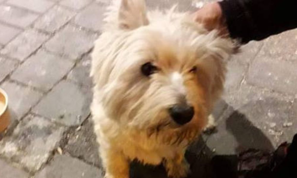 Found: Dog wearing an orange/brown collar