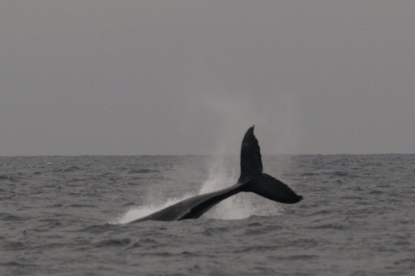 Whales are back around the Waterford coast