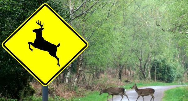 Drivers urged to be wary of deer on east Waterford roads