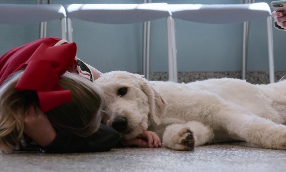 """Listen back: """"Dogs"""" on Netflix is heartwarming and a bit of a tear-jerker, Claire Power tells The Big Breakfast Blaa"""