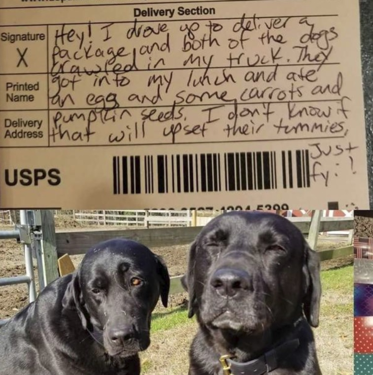 Dogs eat Virginia mail carrier's lunch, get shamed