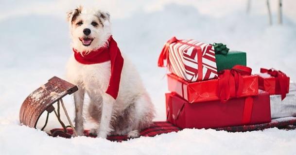 Hallmark Christmas movies -- new for 2018