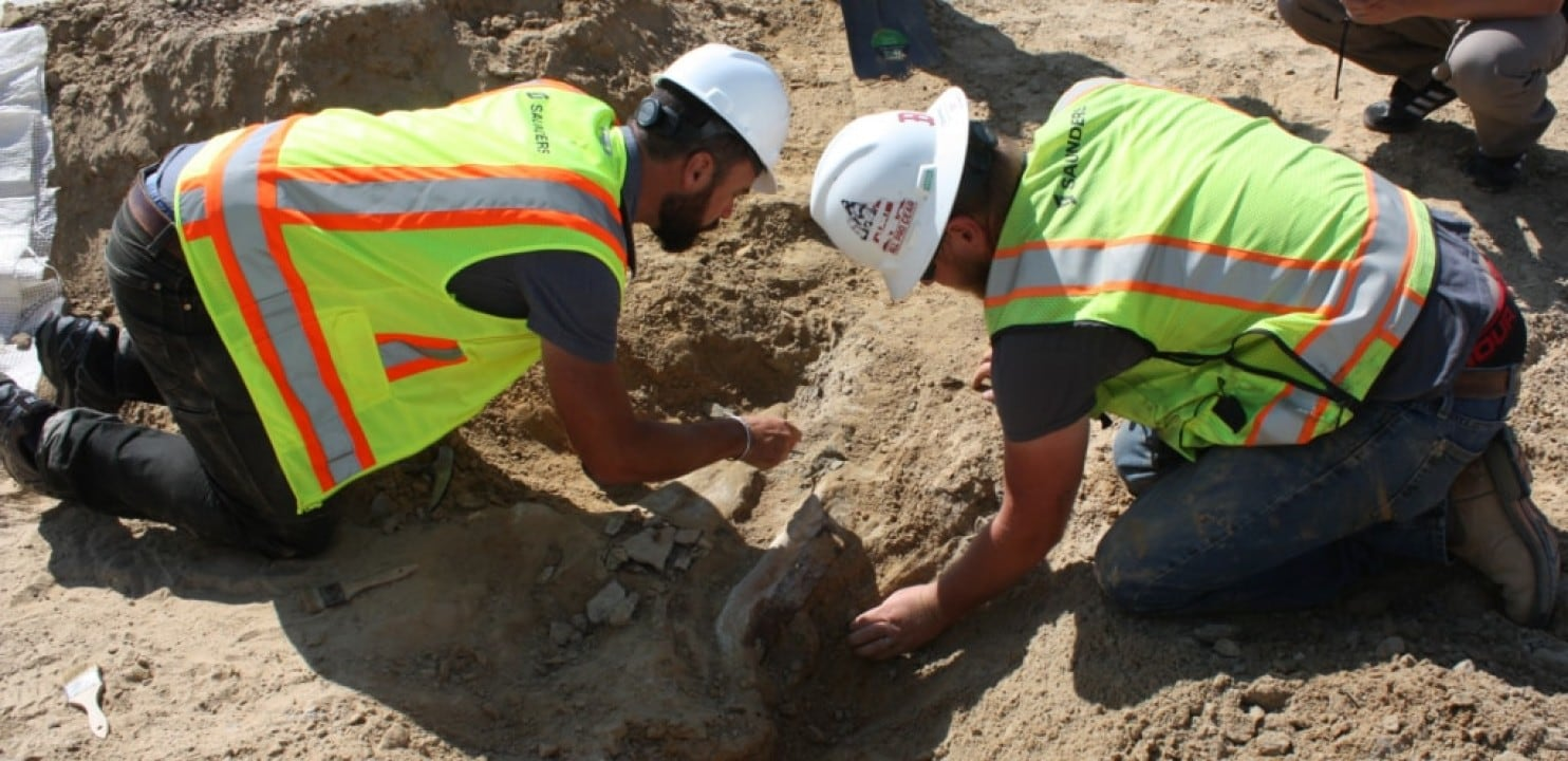 A 66-million-year-old Triceratops Has Been Unearthed
