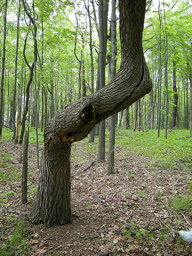 If You See a Bent Tree, Look Around. You Could Find Something Cool
