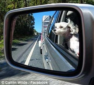 The Family Road Trip With Our Fur Babies