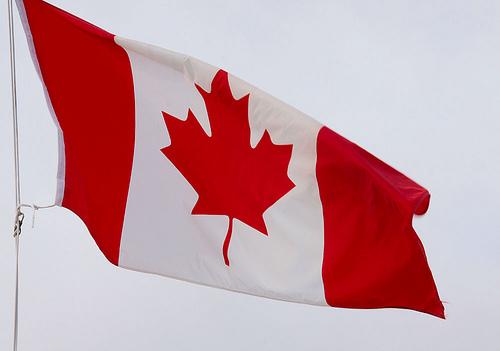 I Guess Hummingbirds Love Canada