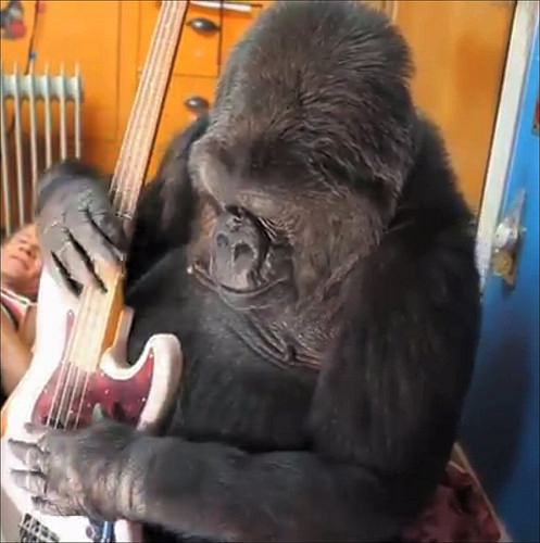 R.I.P. KOKO The Sign Language Gorilla: Dead At 46