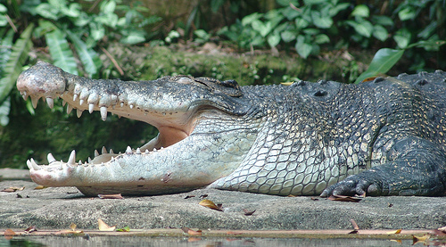 This Day In Stupid: Let's Sit On A Crocodile