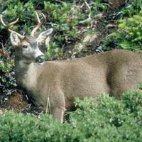 Fewer deer hunters impacts state conservation funds