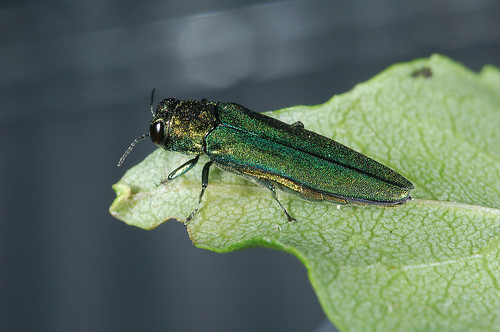 State looking for next steps for EAB