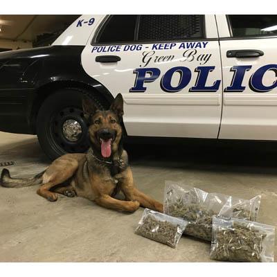 G.B. police dog makes pot bust