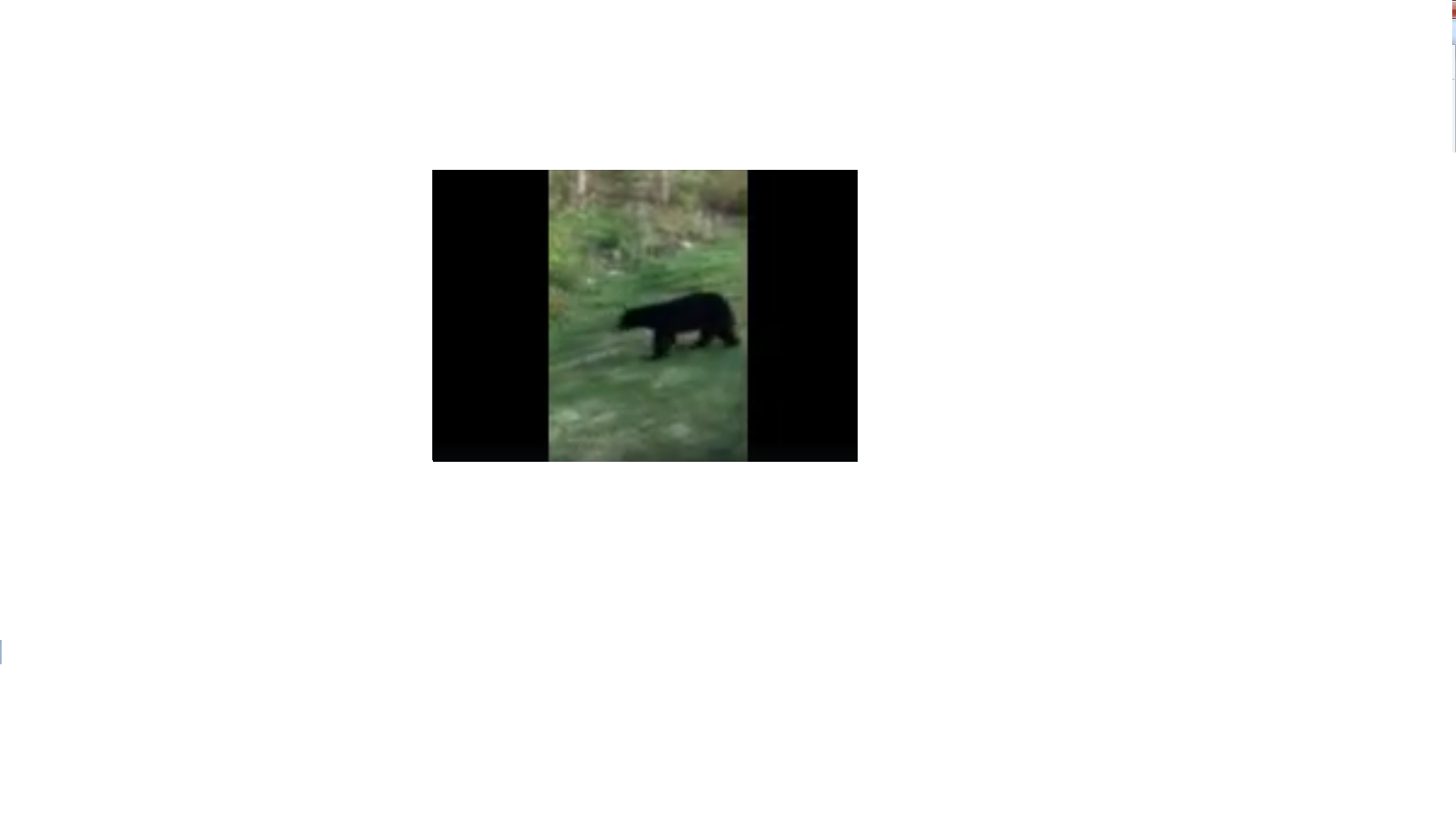 """DNR officials say they hope to capture second bear following """"a lot"""" of sightings"""