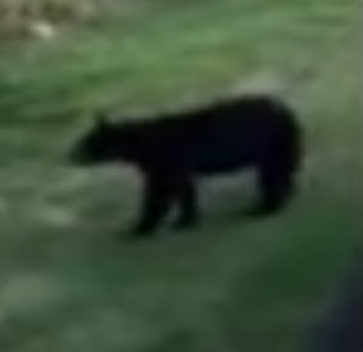 Town officials ask residents to be proactive, educated about bear sightings