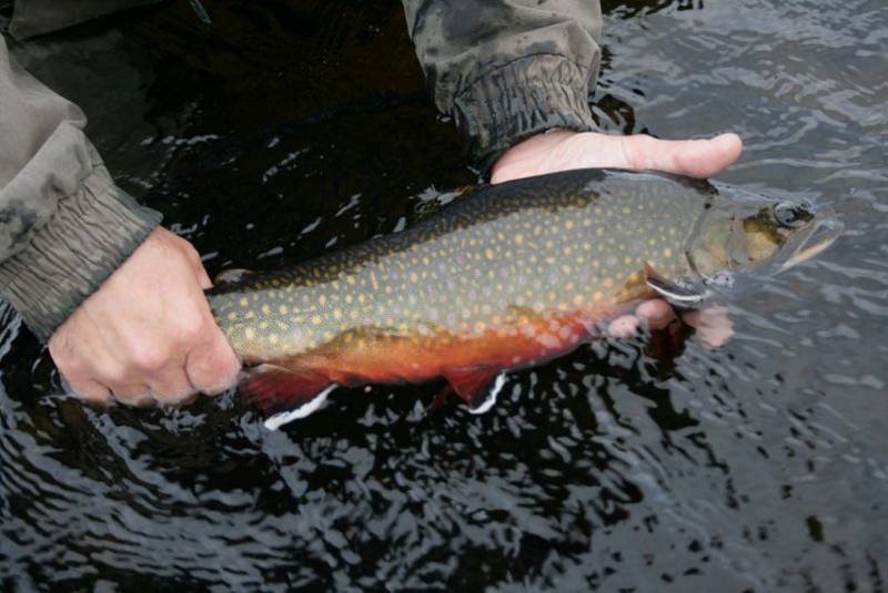 Winter Sportfishing Season Opens