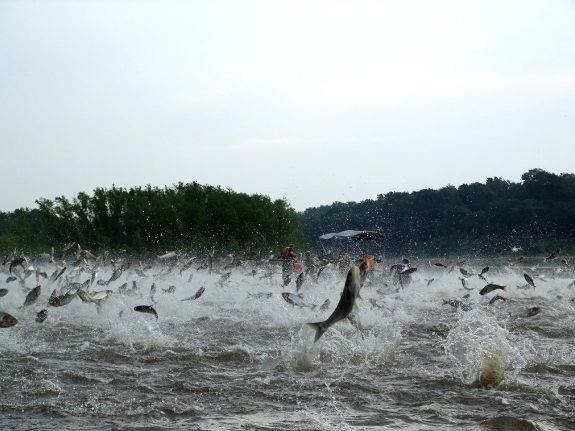 Kentucky Fish House Contract Awarded To Fight Asian Carp Whop 1230