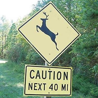 Wrecks involving deer increase this time of year