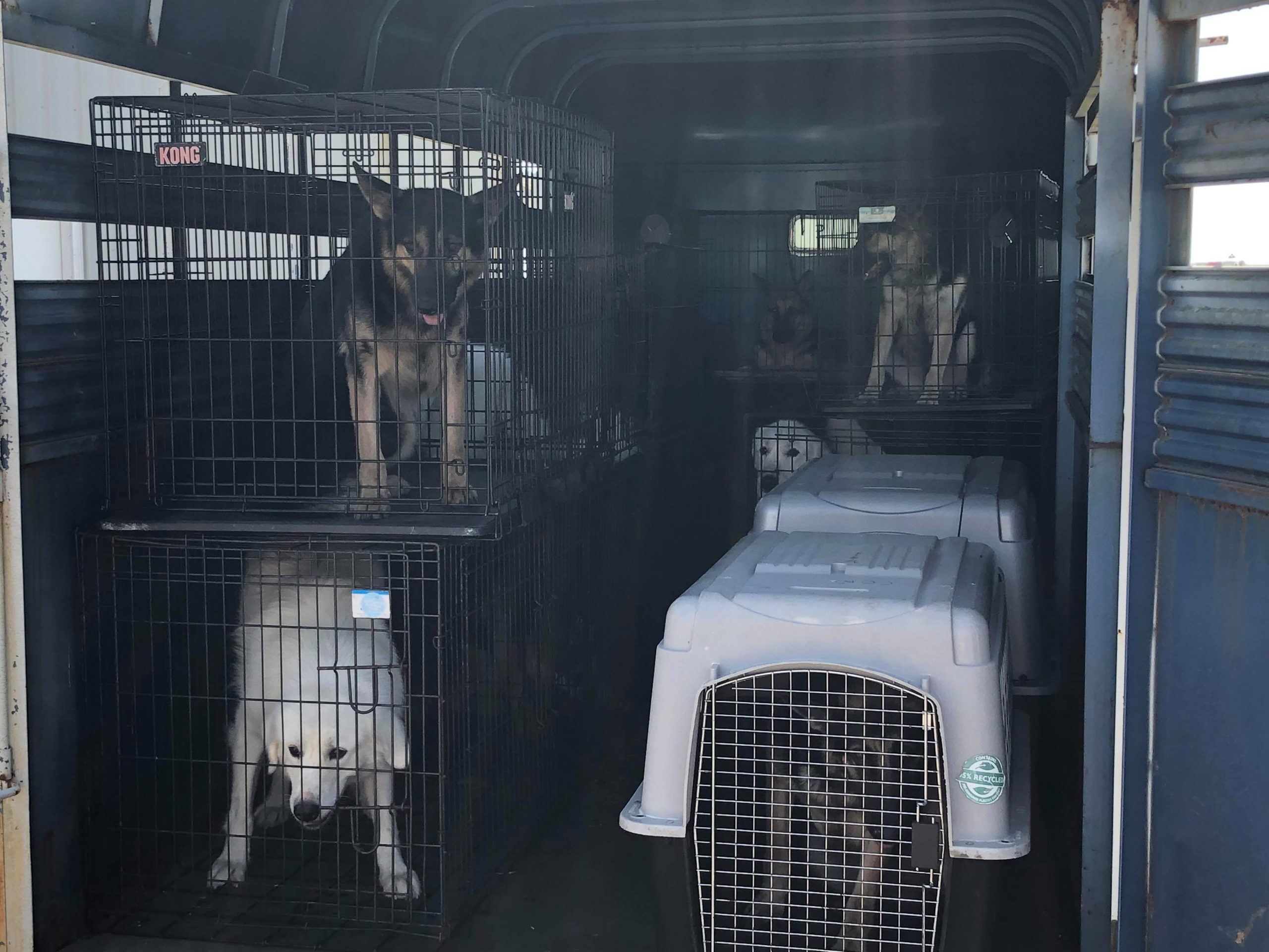 38 Dogs Removed From Trigg Kennel Woman Charged Whop 1230