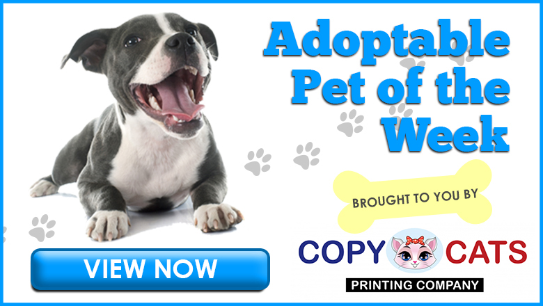 Feature: http://www.wklw.com/adoptable-pet-of-the-week/