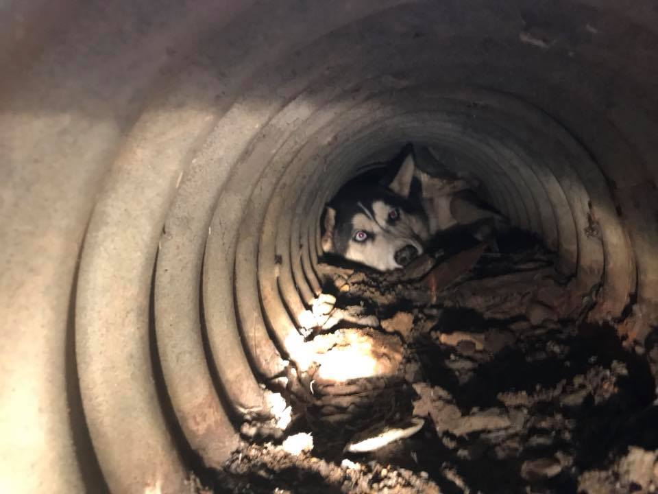 Firefighters Rescue Husky Stuck In Johnson County Culvert