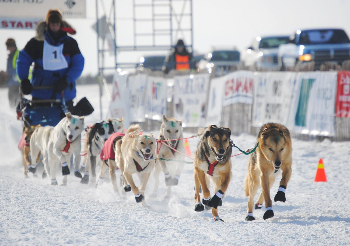 Sled Dog Race Jumps Into The Game Panow