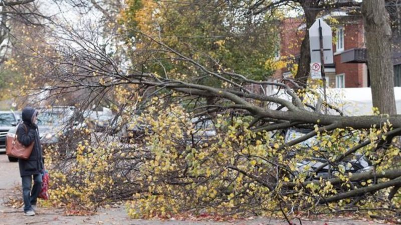 1 dead, almost 629000 customers without power following wind storm in Quebec