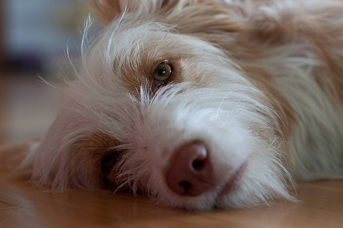 Your Dog Can Get the Flu Too . . . Here's How to Keep Them Healthy
