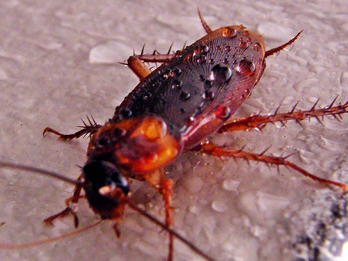 A Cockroach Crawls Into a Woman's Ear . . . and It Takes Nine Days to Get Him Out