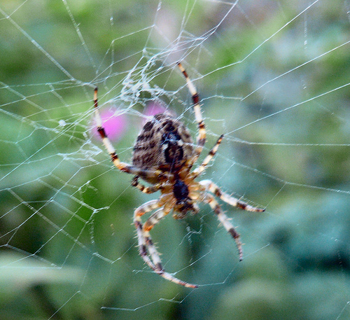 SPIDERS BEWARE! Woman Leaves This Note For The Postman!