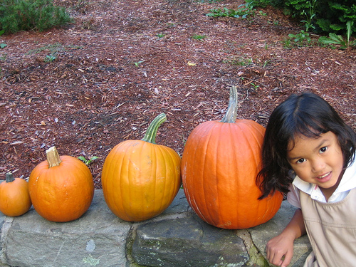 Someone Just Grew the Heaviest Pumpkin in American History