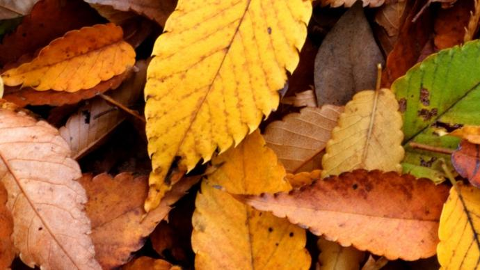 Big Problems May Be The Cause Of Leaves Changing Color Early