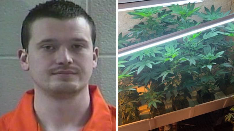 Laurel County Man Arrested For Growing Marijuana Plants