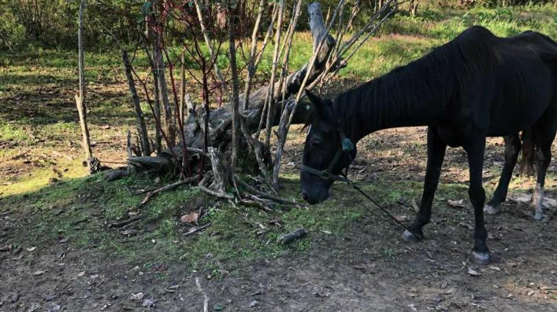 Horse found emaciated in Perry County going to rehab