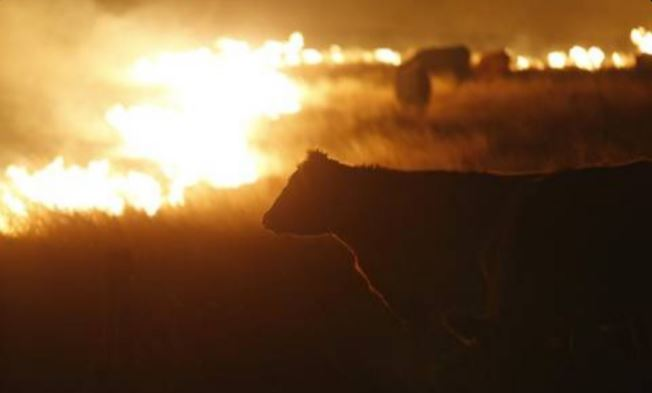 Ranchers concerned about lingering impacts of last summer's wildfire season