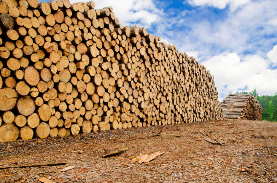 Interior sawmills are taking it on the chin but not for the reason you might think