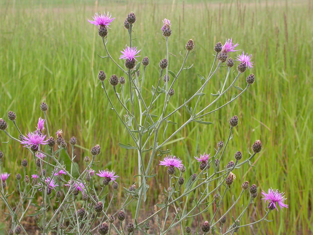 TNRD residents have a chance to learn more about invasive plants in the area tomorrow