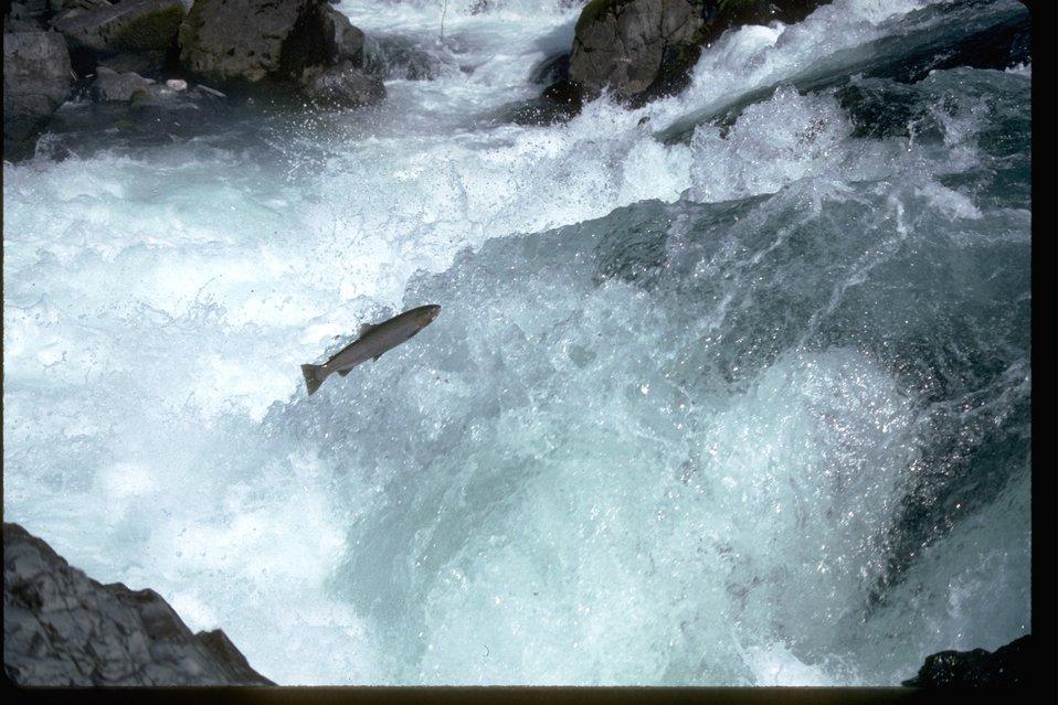 Cache Creek Mayor takes Steelhead extinction concerns to UBCM