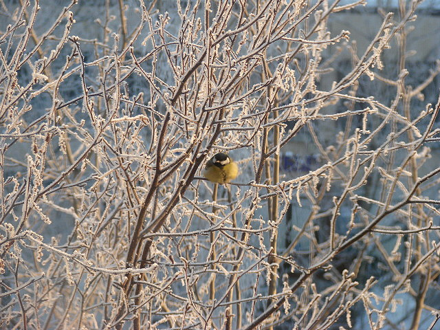 TRU researchers looking into bird population decline