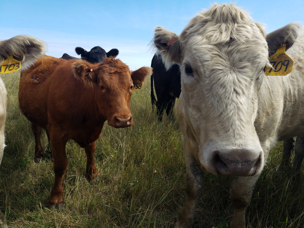 B.C ranchers won't be losing money with new trade agreement