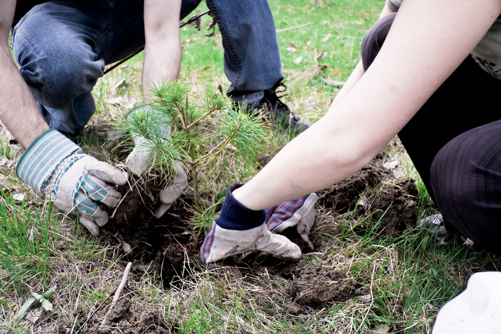 UBC Forestry Developing Technology on Where to Plant Trees in the Future
