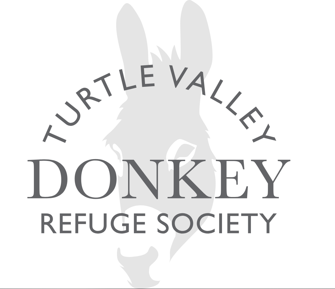Turtle Valley Donkey Refuge Given Money to Help Expansion